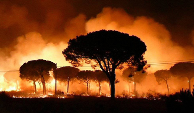 Wildfire in Doñana National Park (source: El Pais)