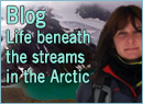 Blog Life beneath the streams in the Arctic