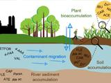 Pharmaceuticals in irrigation water: the role of the soil in the natural attenuation of health risk